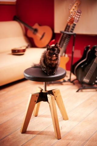 1969 oak frame swivel guitar stool, the kitty sitting on the black faux leather round seat